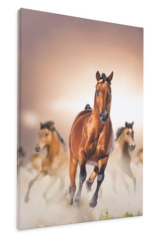 obrazy koni na płótnie