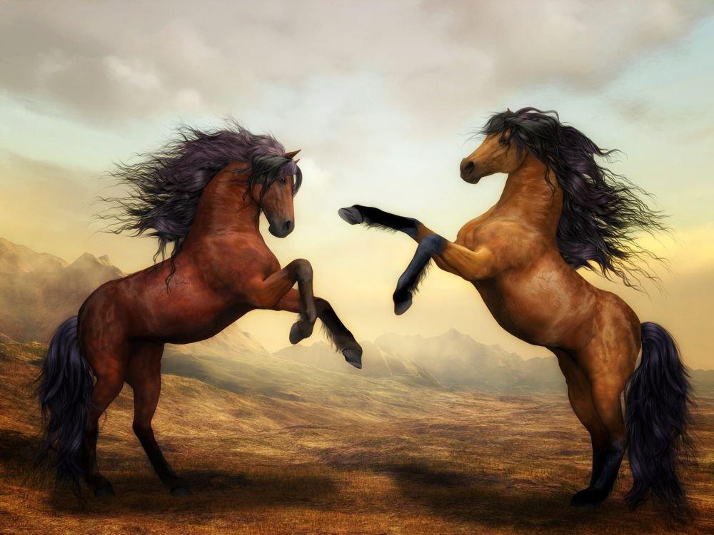 Obraz Na Płótnie Walczące Konie Obraz Na Płótnie Realizacja Od 48h